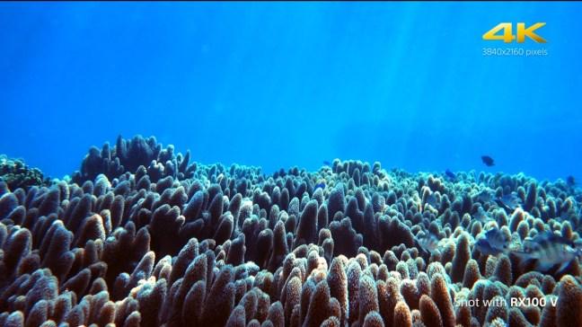 Underwater 4K movie